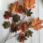 Ветка с кленовыми листьями